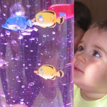 Set de 12 poissons colorés...